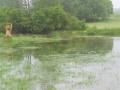 Voda 3.6.2013, MS